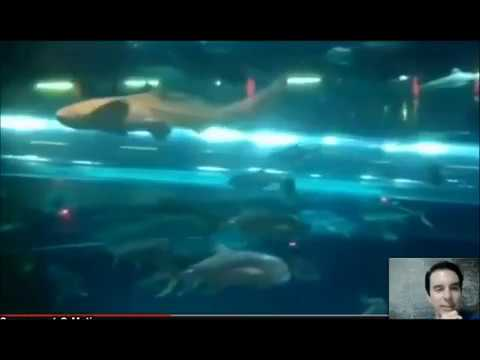 Las Vegas Trip - Stratosphere - Bellagio Water Show - Freemont Street   Golden Nugget Sharks 5
