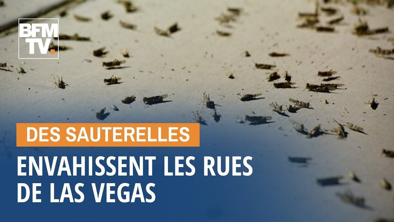 L'impressionnante invasion de sauterelles dans les rues de Las Vegas 10