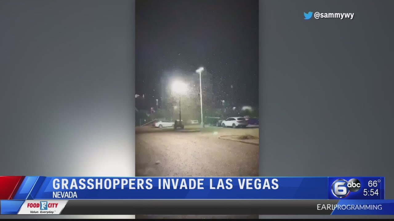 VIDEO: Las Vegas being plagued by grasshoppers 3